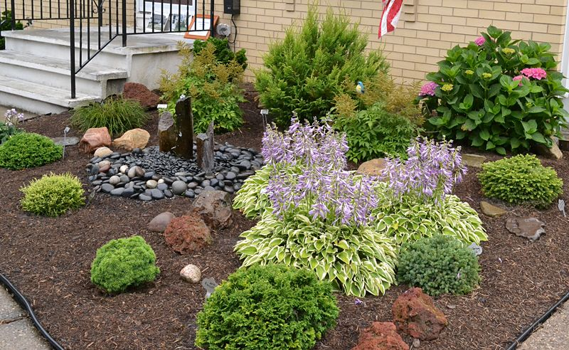 Low growing shrubs for front of house slow growing for Low maintenance plants for small gardens