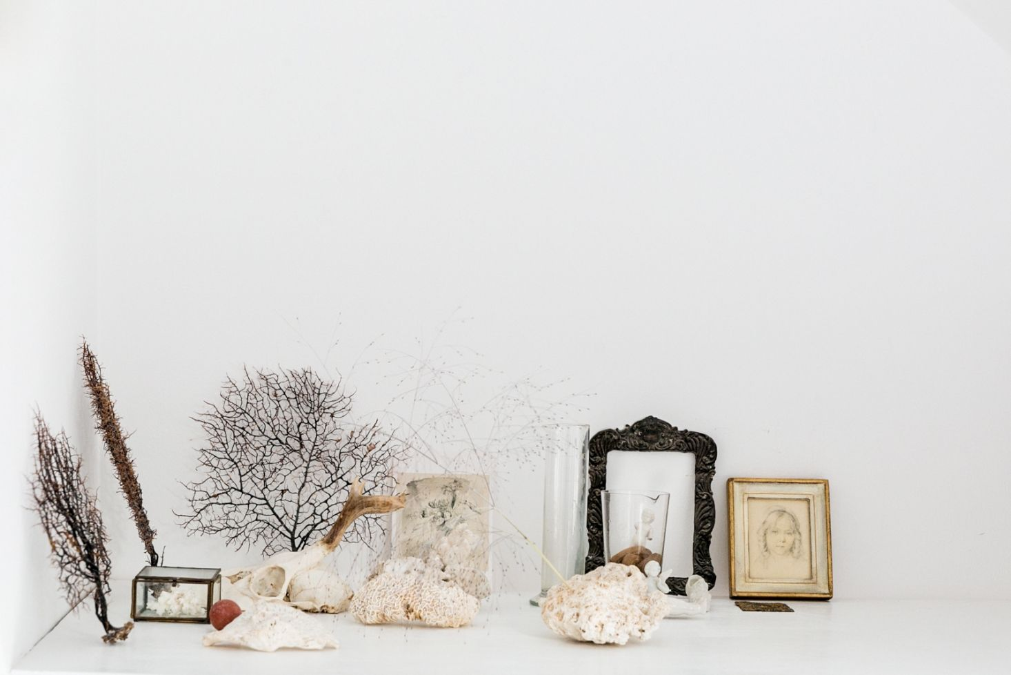 Still life with shells vignette by yasuyo harvey see more at the botanical life