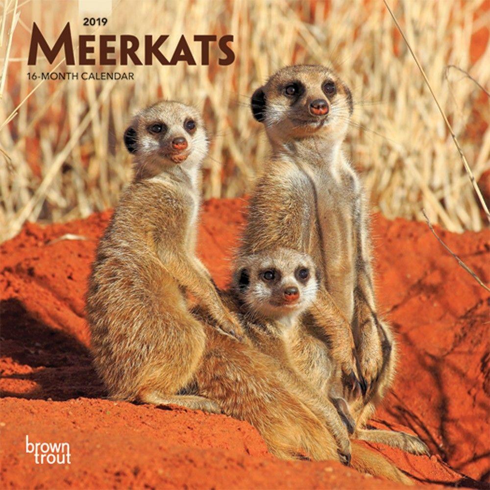 Meerkats 2019 7 X 7 Inch Monthly Mini Wall Calendar Wildlife
