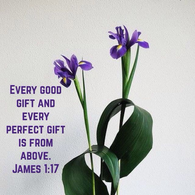 James 1:17, King James Version (KJV) | Inspirational bible quotes, Bible words, Bible inspiration