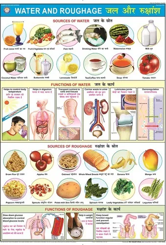 Water Roughage Chart Health And Beauty Educational Maps Chart