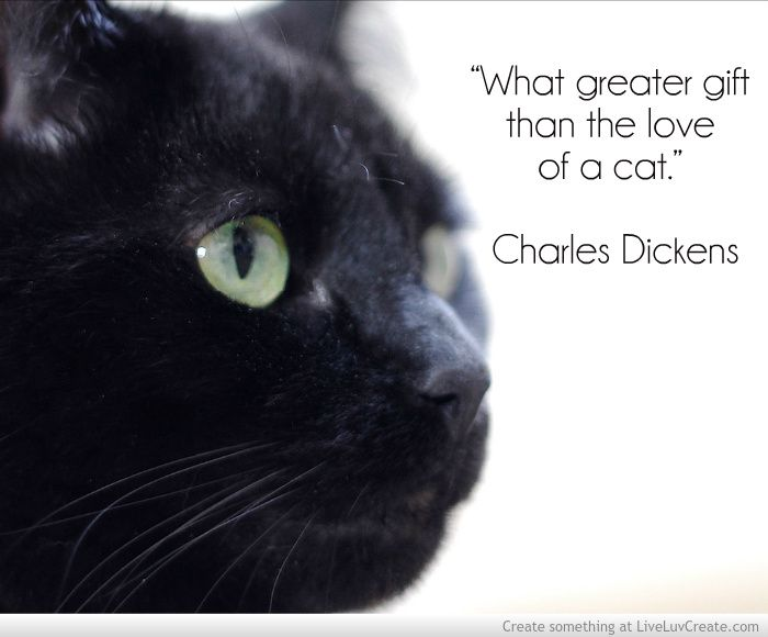 Cat photo | Feline Enthusiast | Cat quotes, Black cat quotes ...
