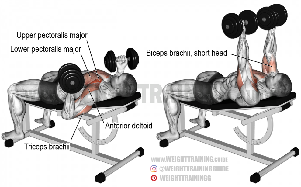 Incline Reverse Grip Dumbbell Bench Press Exercise
