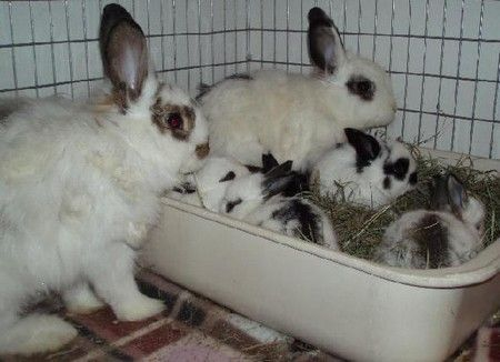 How to litter box train your rabbit & family. How to litter box train your rabbit | Pet Rabbits ... Aboutintivar.Com