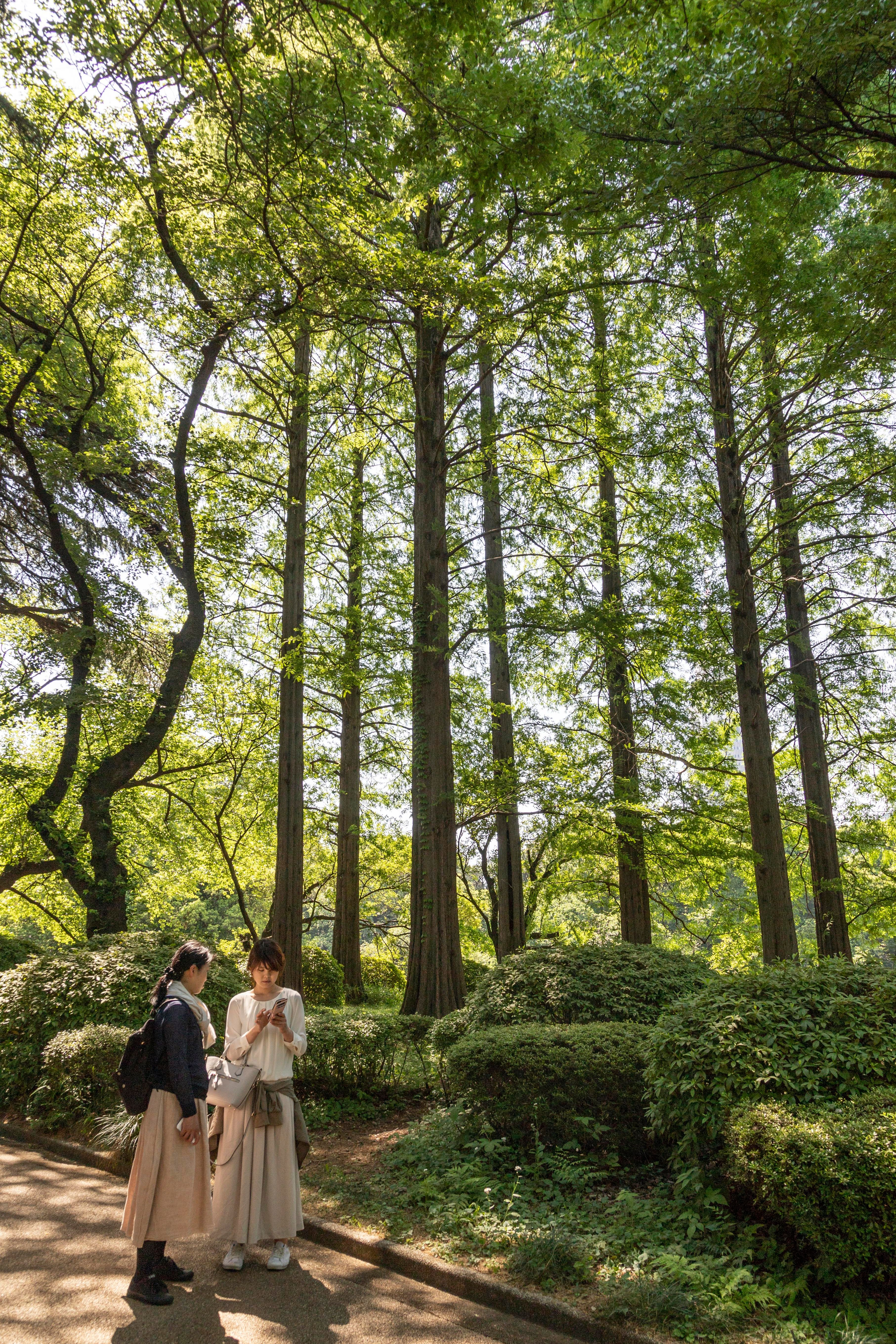 Green. I miss you. Sweet memories of our week in Japan - Shinjuku Gyoen park on a lovely #Spring Saturday afternoon. . . #travel #travelphotography #japan #japantravel #photography #nofilter #Canon #Canon6Dmkii #CanonEF24-105f4 #ig_captures_nature #photographer