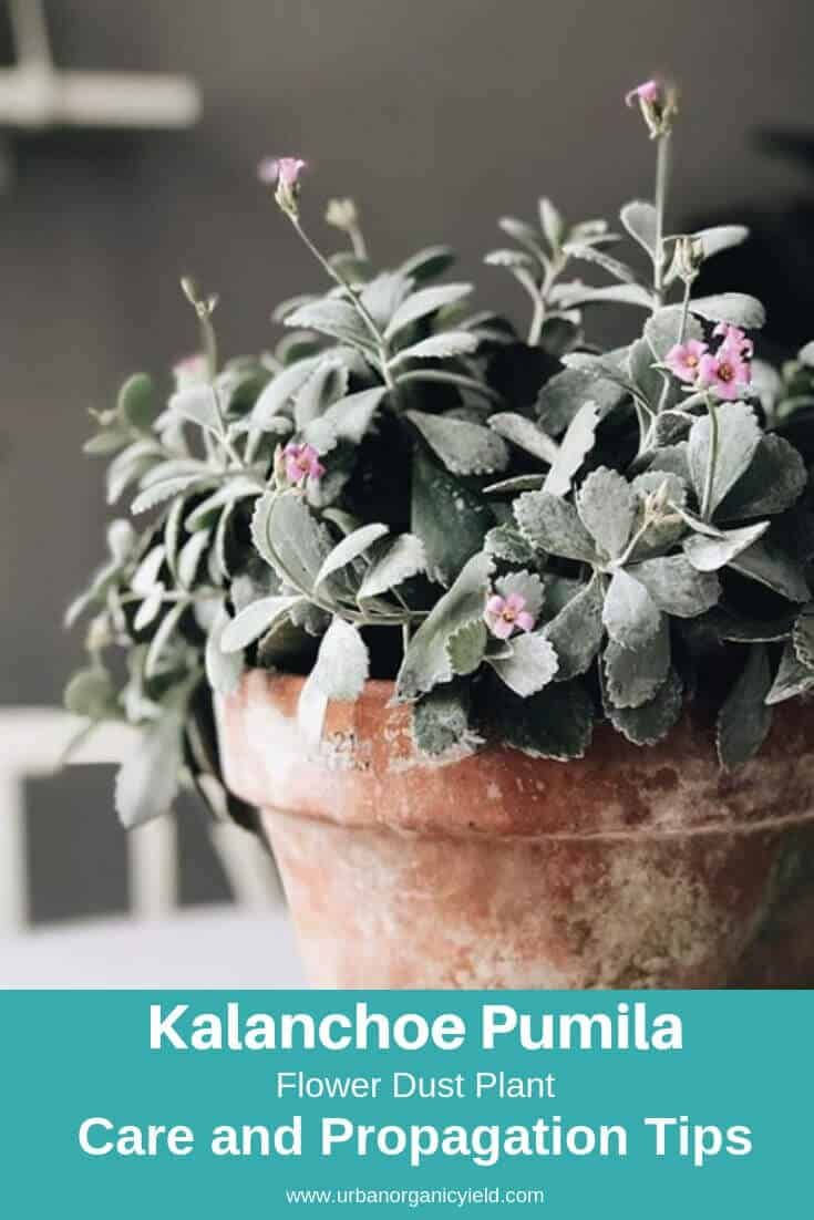 Photo of 64 Types Of Succulents With Pictures | Details & Care Tips