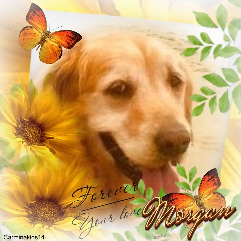 Morgan S Summer Graphic From Golden Retrievers Hearts Of Gold