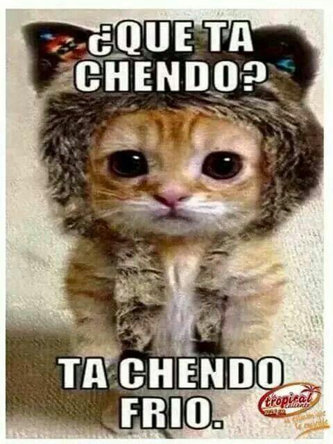Pin De Carmen Irizarry En En Espanol Gatitos Divertidos Mascotas Memes Memes De Animales Divertidos
