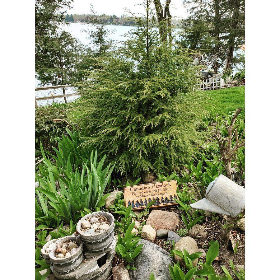 Wooden Businesssigns Bobbydaleearnhardt.com