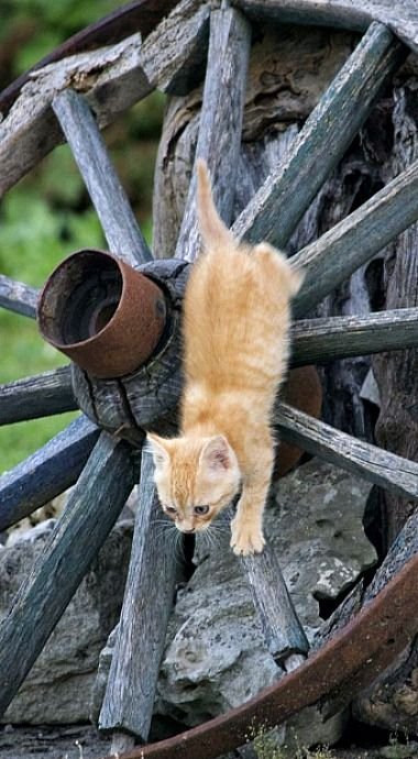 Animals Plants And Nature By Penta Spica Kittens Crazy Cats Cat Pics