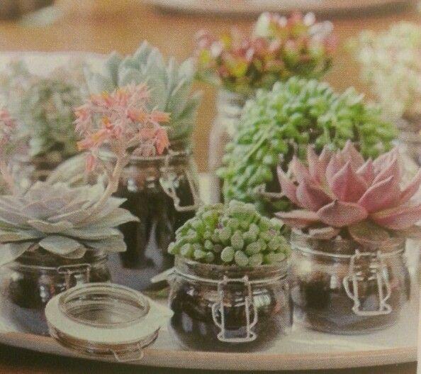 Piante grasse 5 manu pinterest piante grasse piante - Vasi con piante grasse ...