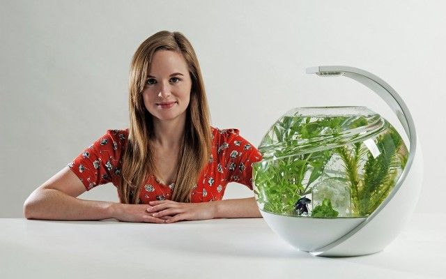 Tank That Cleans Itself Self Cleaning Fish Tank Cleaning Fish Fish Tank