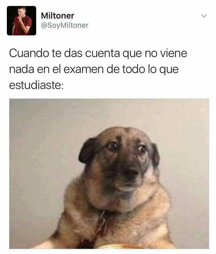 Pin De Fabiola Diaz En Memes Escuela Memes Perros Memes Memes Espanol Graciosos