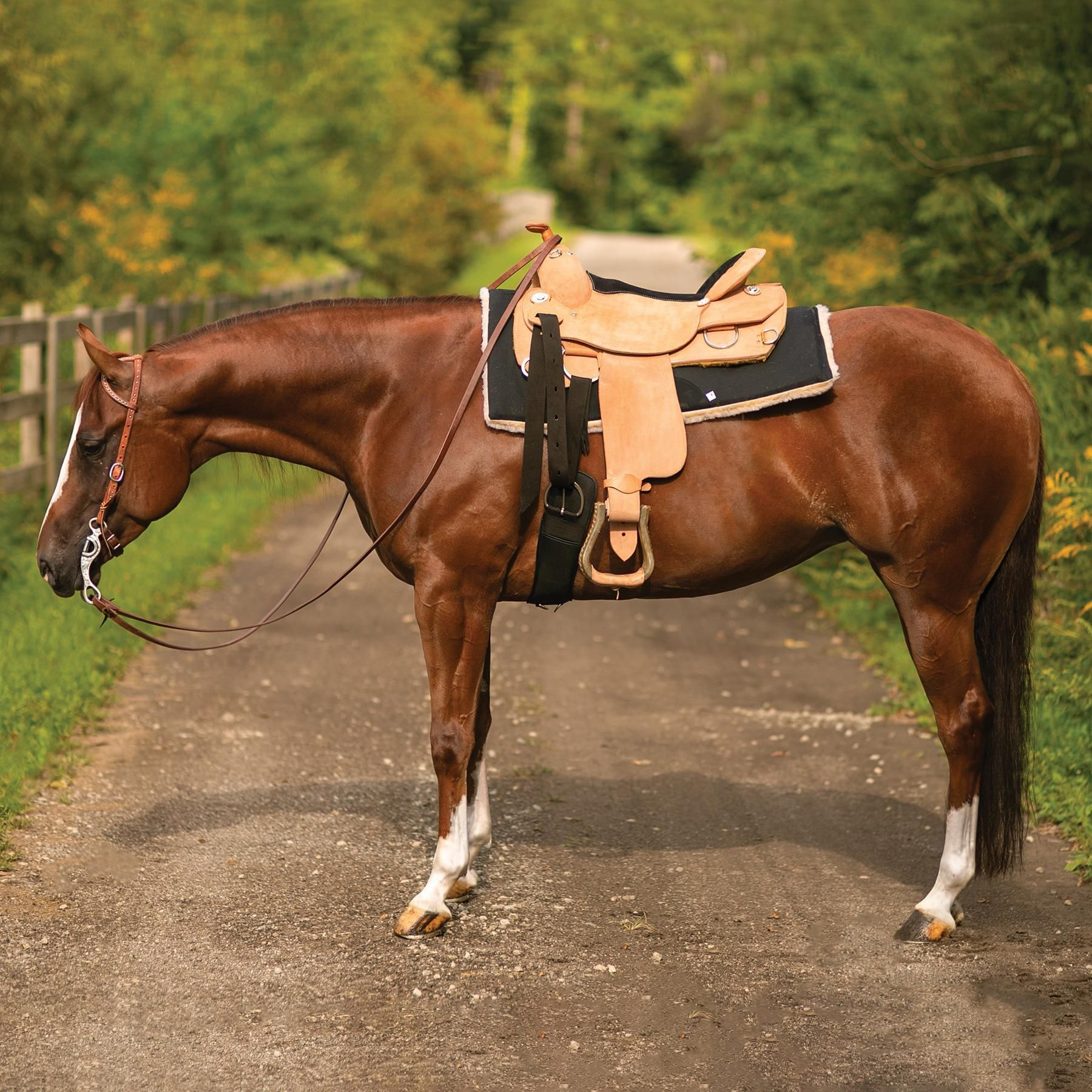 NEW! 🐎 💖 Western Oak™ Cut Off Corner Western Work Saddle