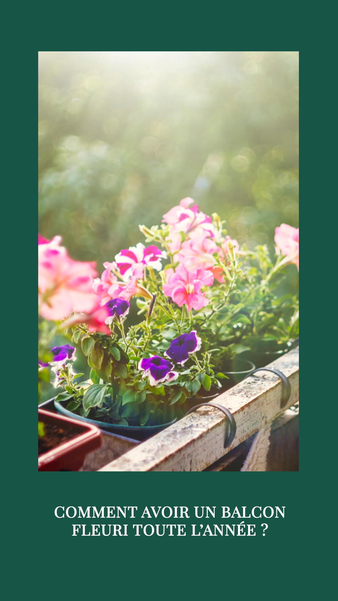 Comment Avoir Un Jardin Fleuri Toute L Année : comment, avoir, jardin, fleuri, toute, année, Comment, Avoir, Balcon, Fleuri, Toute, L'année, Depuis, Hamac, Jardinière, Balcon,, Plante, Exterieur