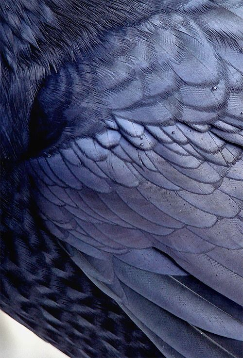 biele vtáky Tumblr