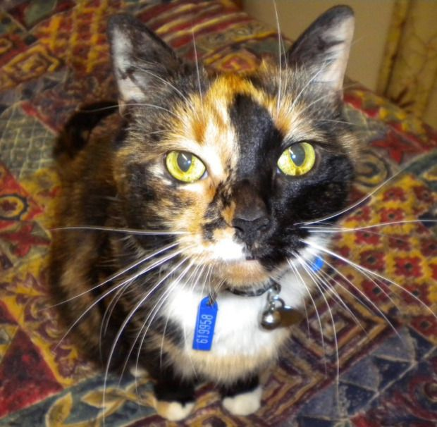 Your Cats 29th March 2015 With Images Cats And Kittens