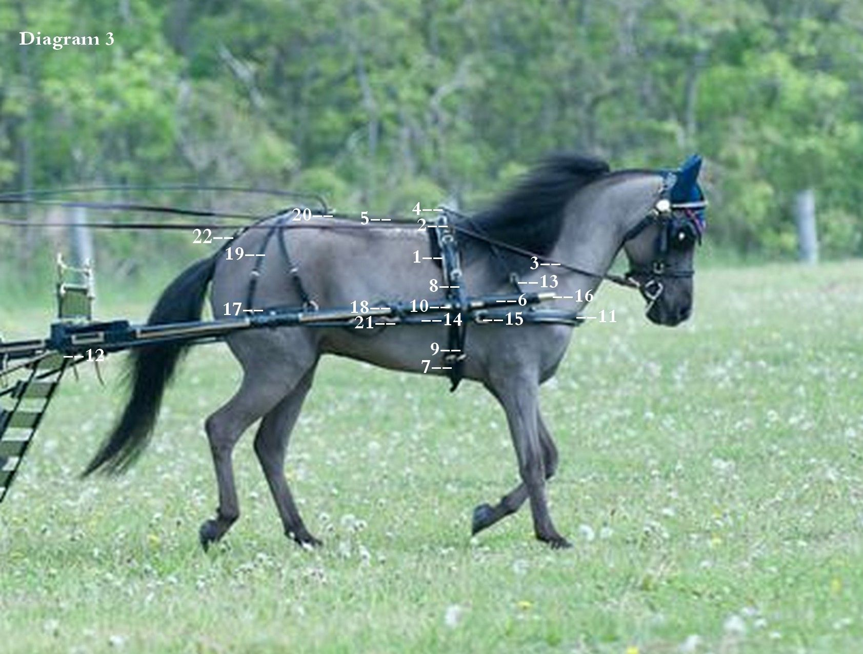 small resolution of the miniature horse harness ozarkcanada horse harness harness racing miniature shetland pony