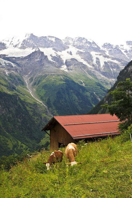 Anders' photo in Switzerland