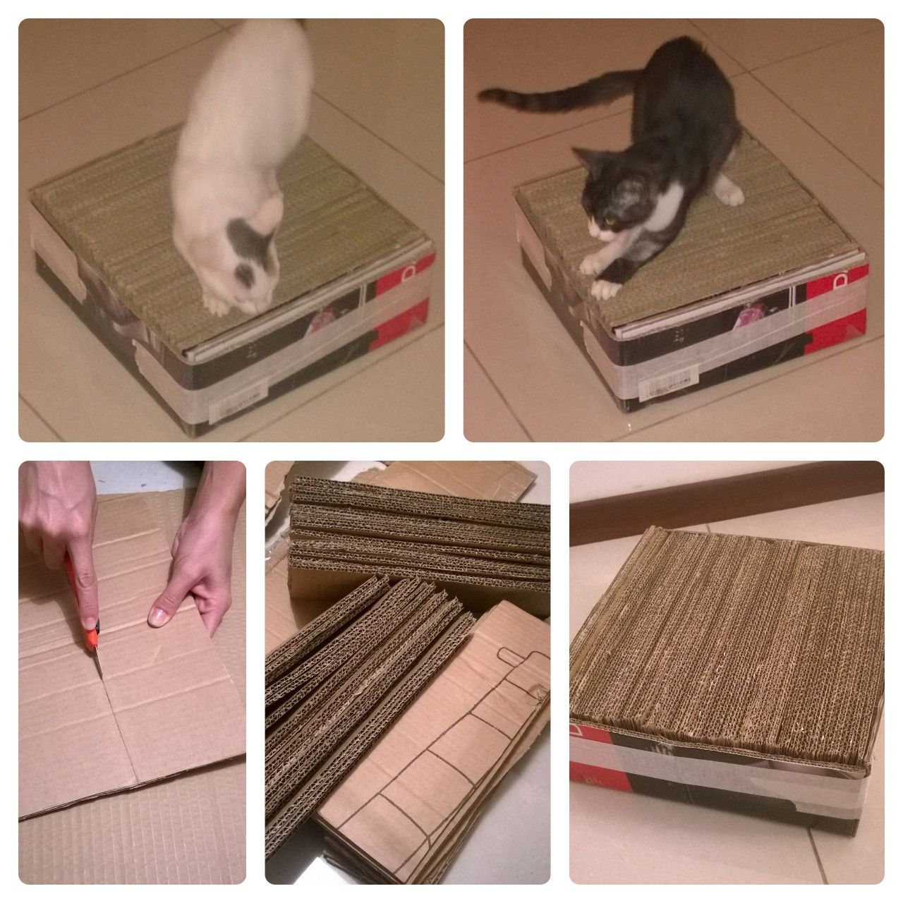 the most awesome images on the internet cardboard cat scratcher cat scratcher and diy cardboard. Black Bedroom Furniture Sets. Home Design Ideas