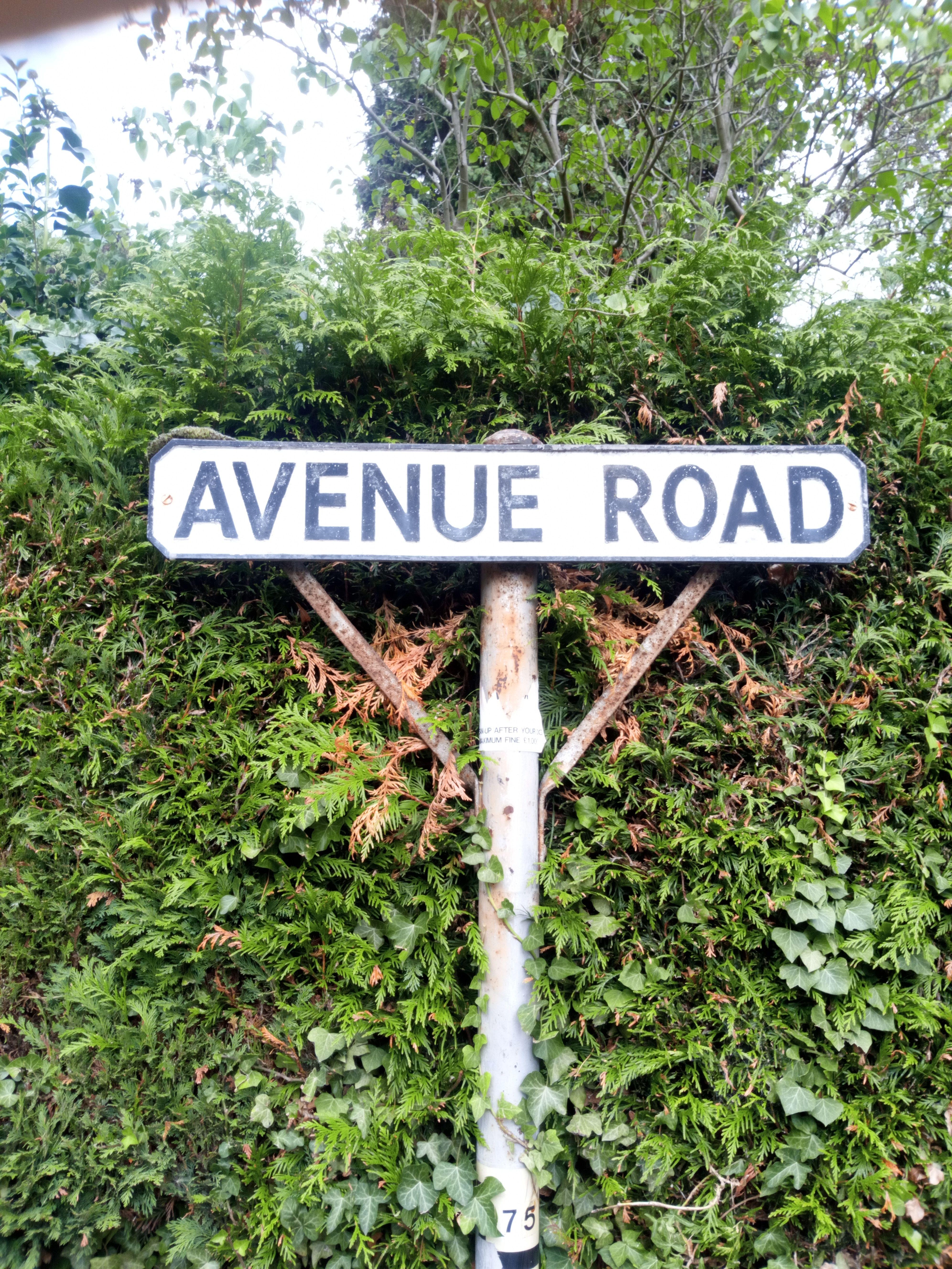 Avenue Road Thoroughfare Type + Thoroughfare Type in