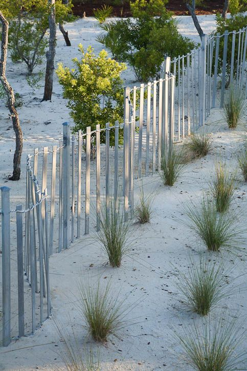 beachy theme sand little plants