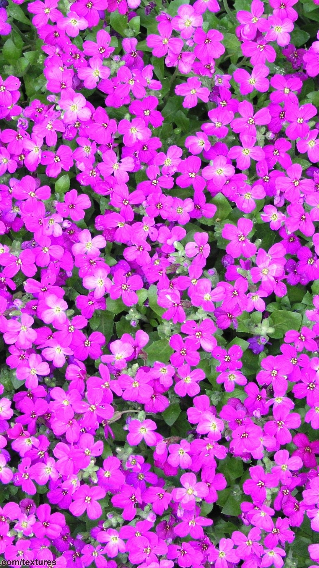 Purple Flowers iPhone 6 Plus Wallpaper 14068 Flowers