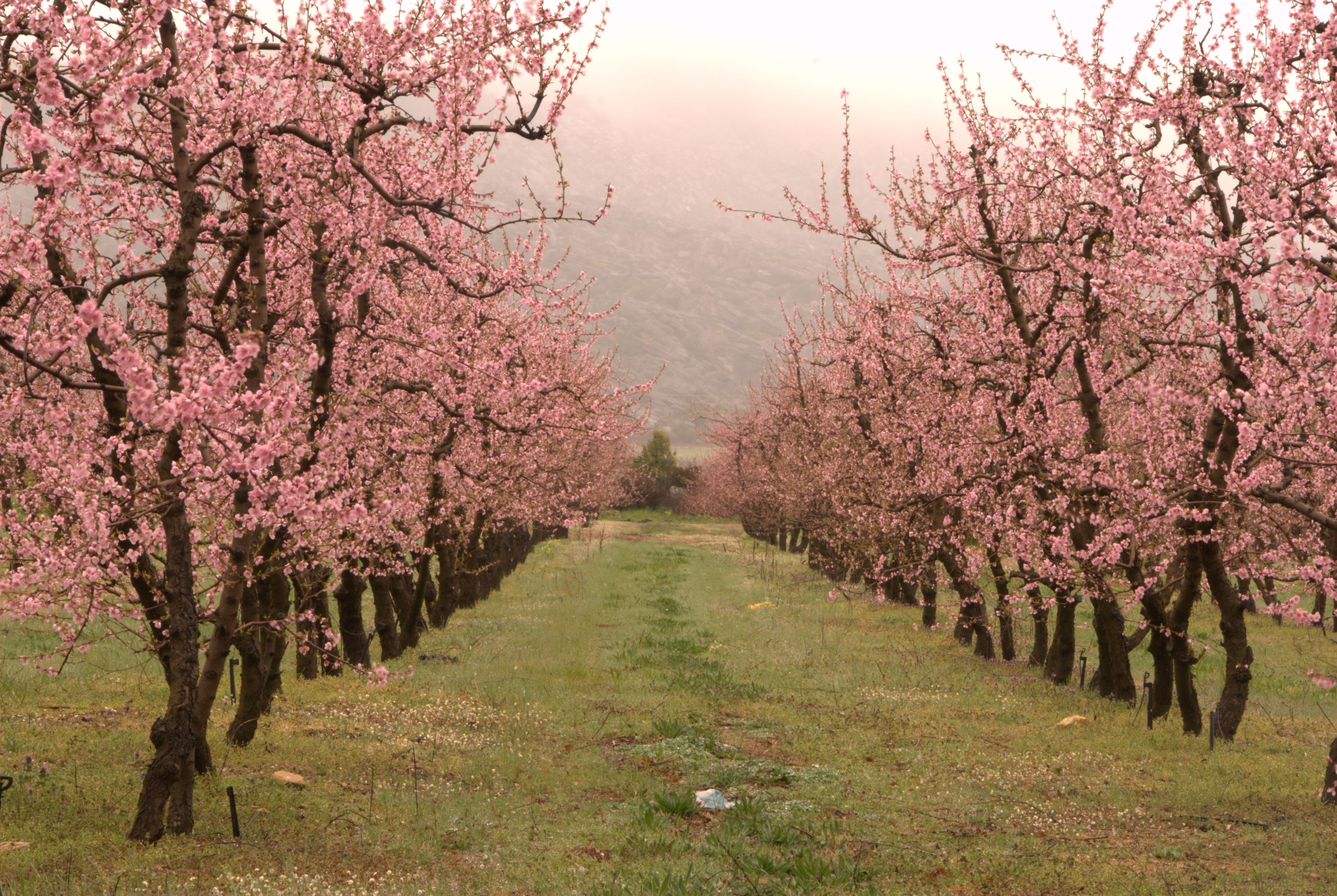 Apple Trees In Ceres South Africa South Africa Travel Provinces Of South Africa South Africa