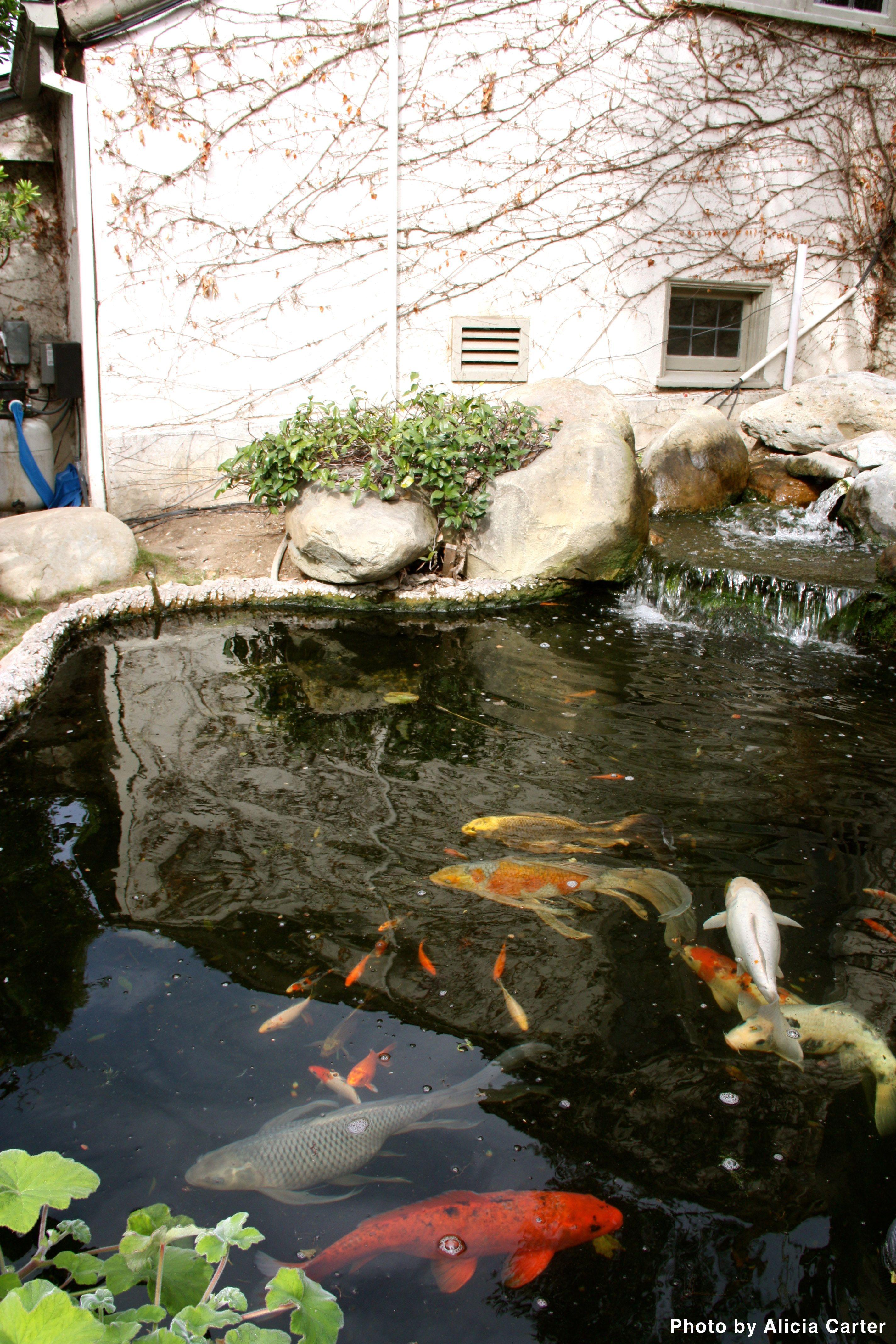 Landscaping Costs Landscaping Costs Landscape Fish Ponds