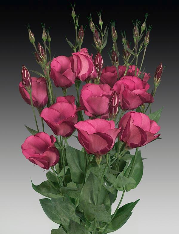 Розы для букетов фото и названием