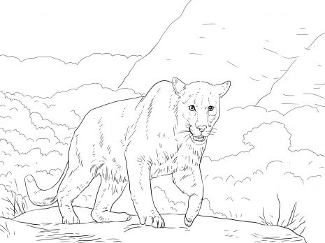 Crouching Puma Coloring Page Super Coloring Animal Coloring Pages Free Printable Coloring Pages Coloring Pages