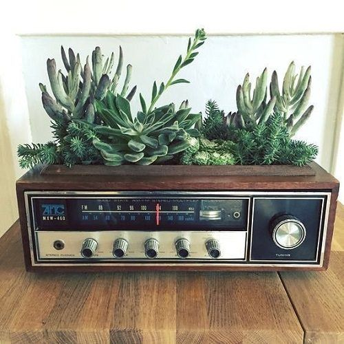 94 DIY Succulent Projects & Ideas