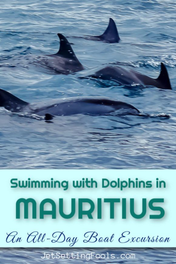 Swimming with Dolphins in Mauritius: A Boat Excursion