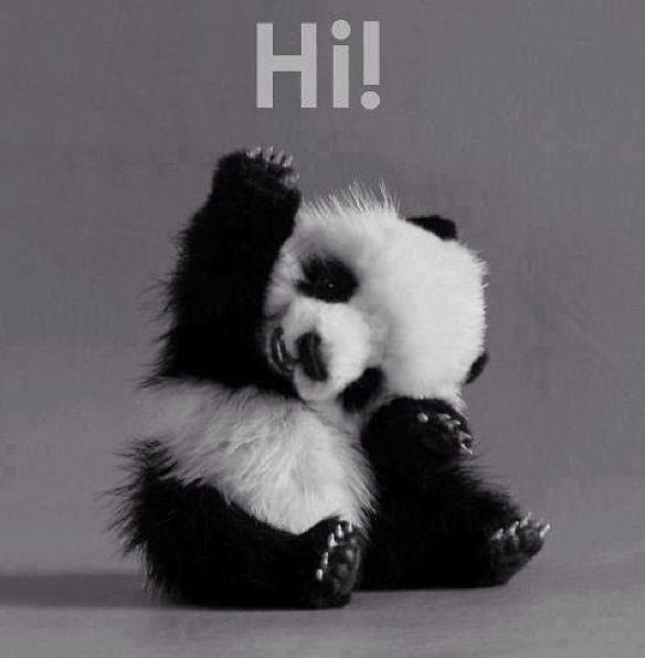 #panda #hi #cuty