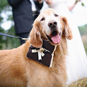 Wedding Dogs: 7 Ways to Dress Your Wedding Dog - Wedding Planning - Bridal Party