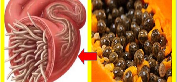 Saldrán Los Parásitos Por Miles En 1 Día Con Semilla De Papaya Semillas De Papayas Para Eliminar Parásitos Alternativa M Food Natural Health Remedies Papaya