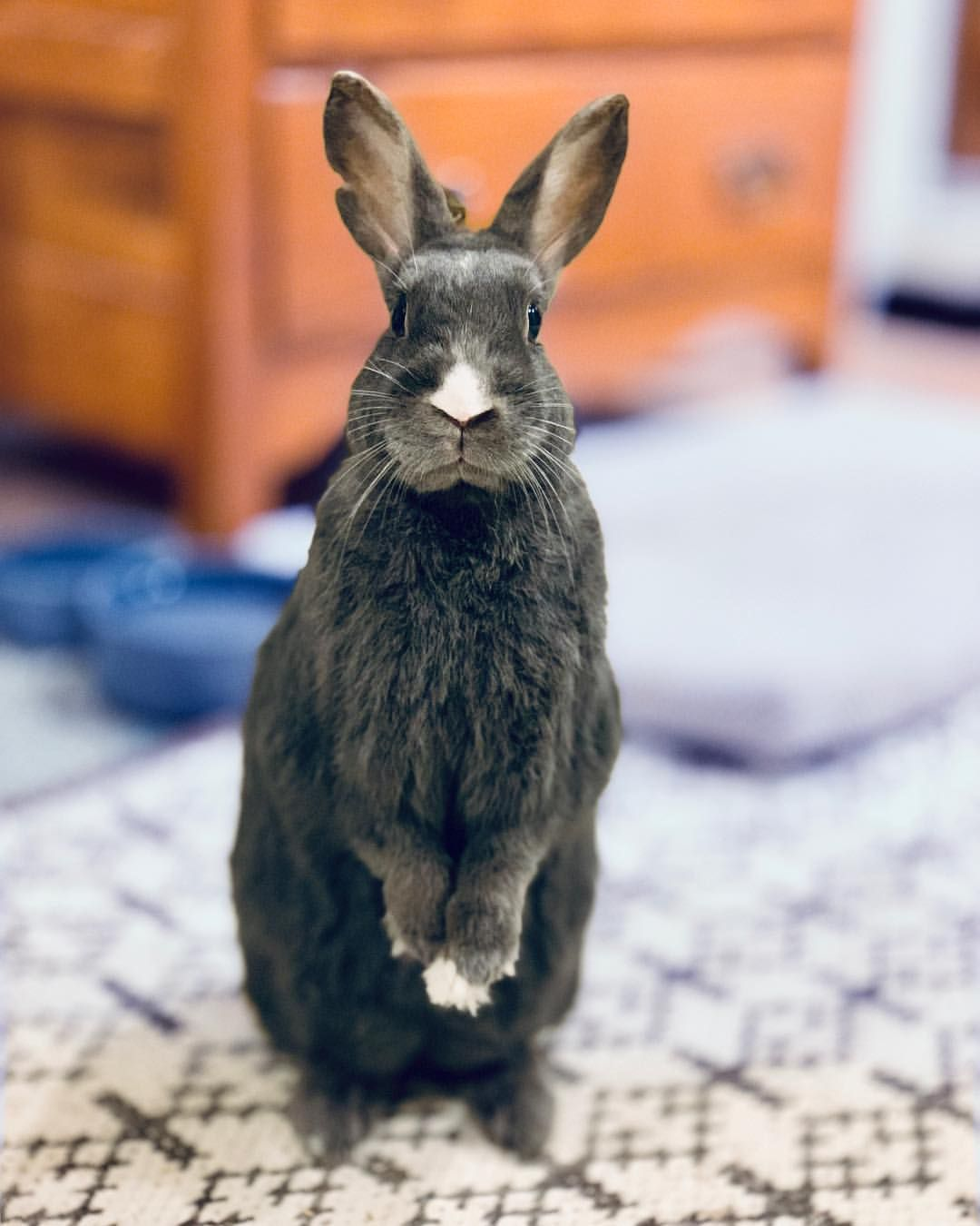 8 Things You Do That Upsets Your Bunny With Images Pet Care Dogs Sick Pets Pets