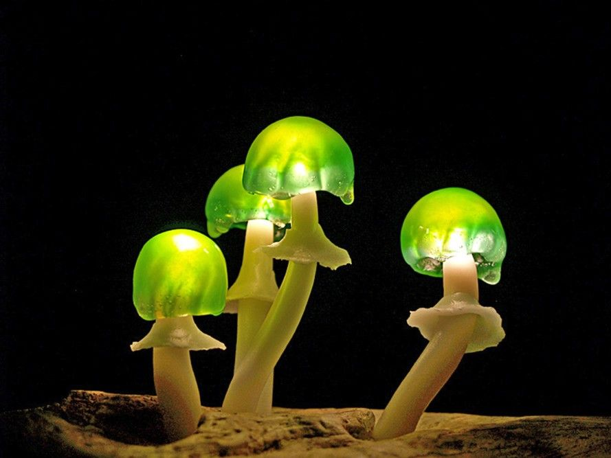 Great mushrooming, Yukio Takano, led lights, green lamps, reclaimed wood, reclaimed wood lamps, mushroom lamps, mushrooms, LED, low-energy lighting, sustainable design, sustainable lighting, energy-efficient lighting