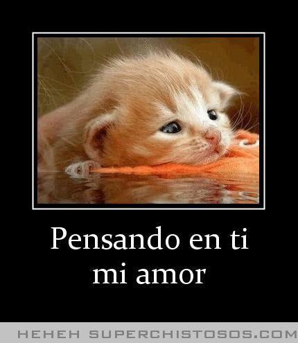 Pensando En Ti Mi Amor Cat Quotes Pets Puppy Care