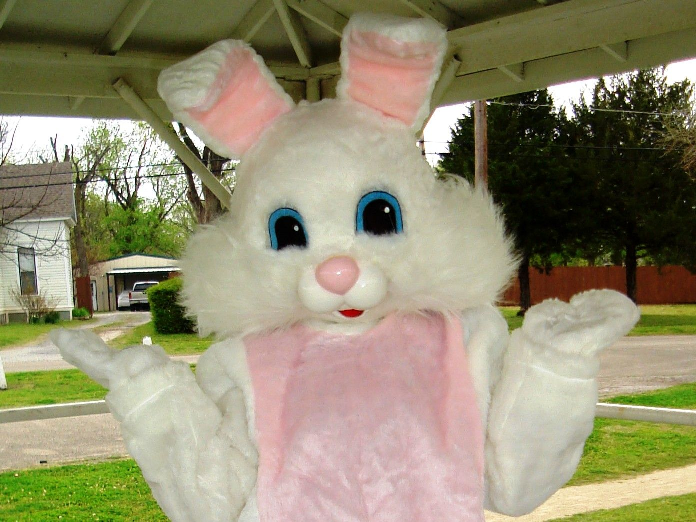 Easter Traditions: Origins of the Easter Bunny | Photos, I wish ...