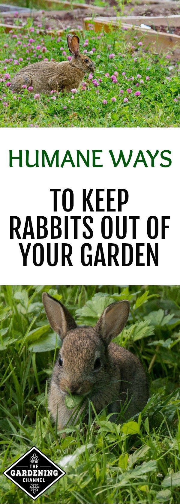 4 ways to keep rabbits from ruining your garden outside - How to keep rabbits out of a garden ...