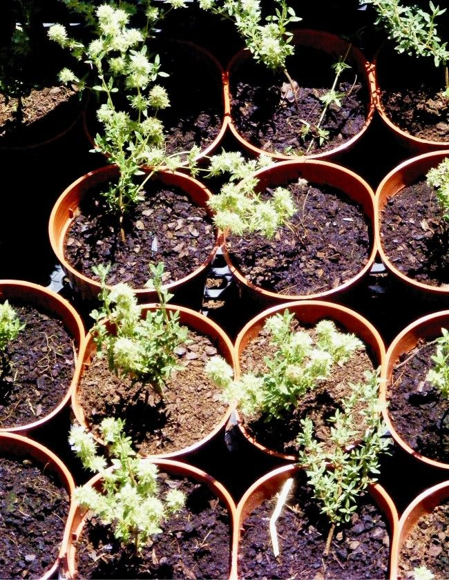 Núcleo PROVE do Ribatejo Interior dinamiza evento sobre ervas aromáticas e plantas medicinais - http://local.pt/nucleo-prove-do-ribatejo-interior-dinamiza-evento-sobre-ervas-aromaticas-e-plantas-medicinais/