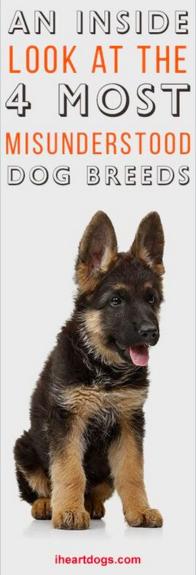 Http Iheartdogs Com The  Most Stubborn Dog Breeds