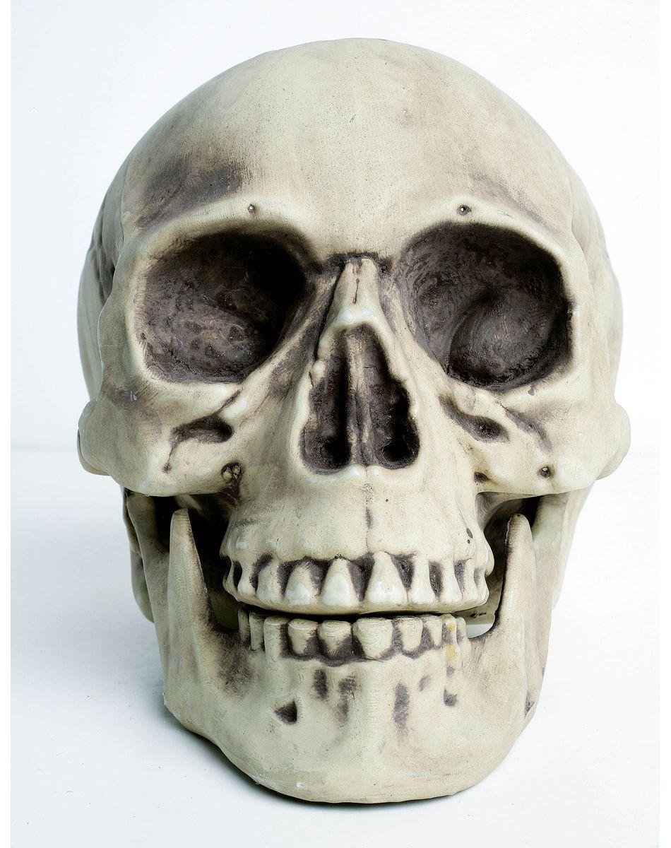 Skeleton Head | Skull Head | Very Good God[Destroy Devils ...
