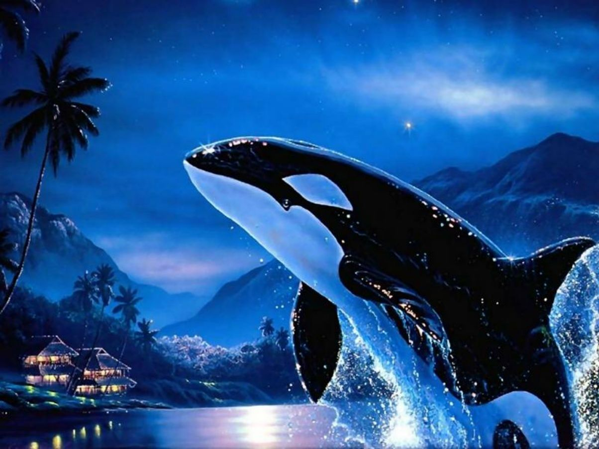 Orca whales orca killer whale moonlight orca animals free desktop wallpapers and backgrounds with orca killer whale moonlight orca altavistaventures Images