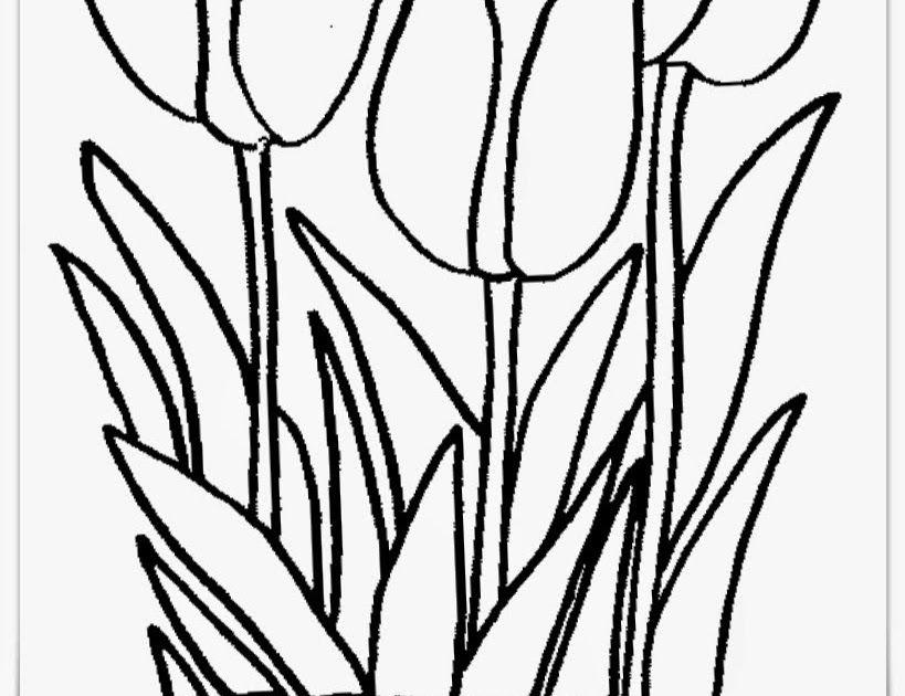 31 Sketsa Gambar Bunga Yg Mudah 24 Gambar Sketsa Bunga Dari Pensil Yang Mudah Dibuat Download Indischool Cara Menggambar Bunga M Gambar Bunga Bunga Sketsa