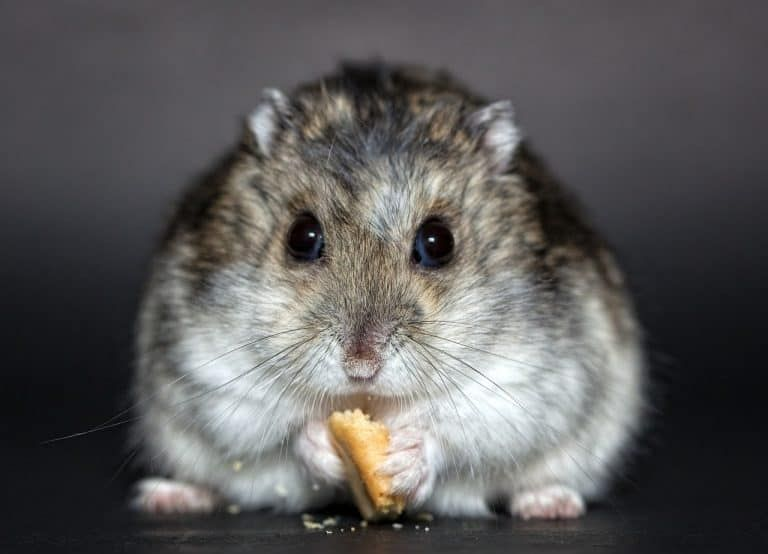 How To Feed Hamsters A Guide For Beginners Hamsters 101 In 2020 Hamster Names Hamster Cute Hamster Names