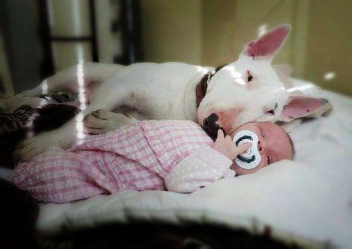M Los niños que crecen con perros desarrollan mayor responsabilidad y sensibilidad
