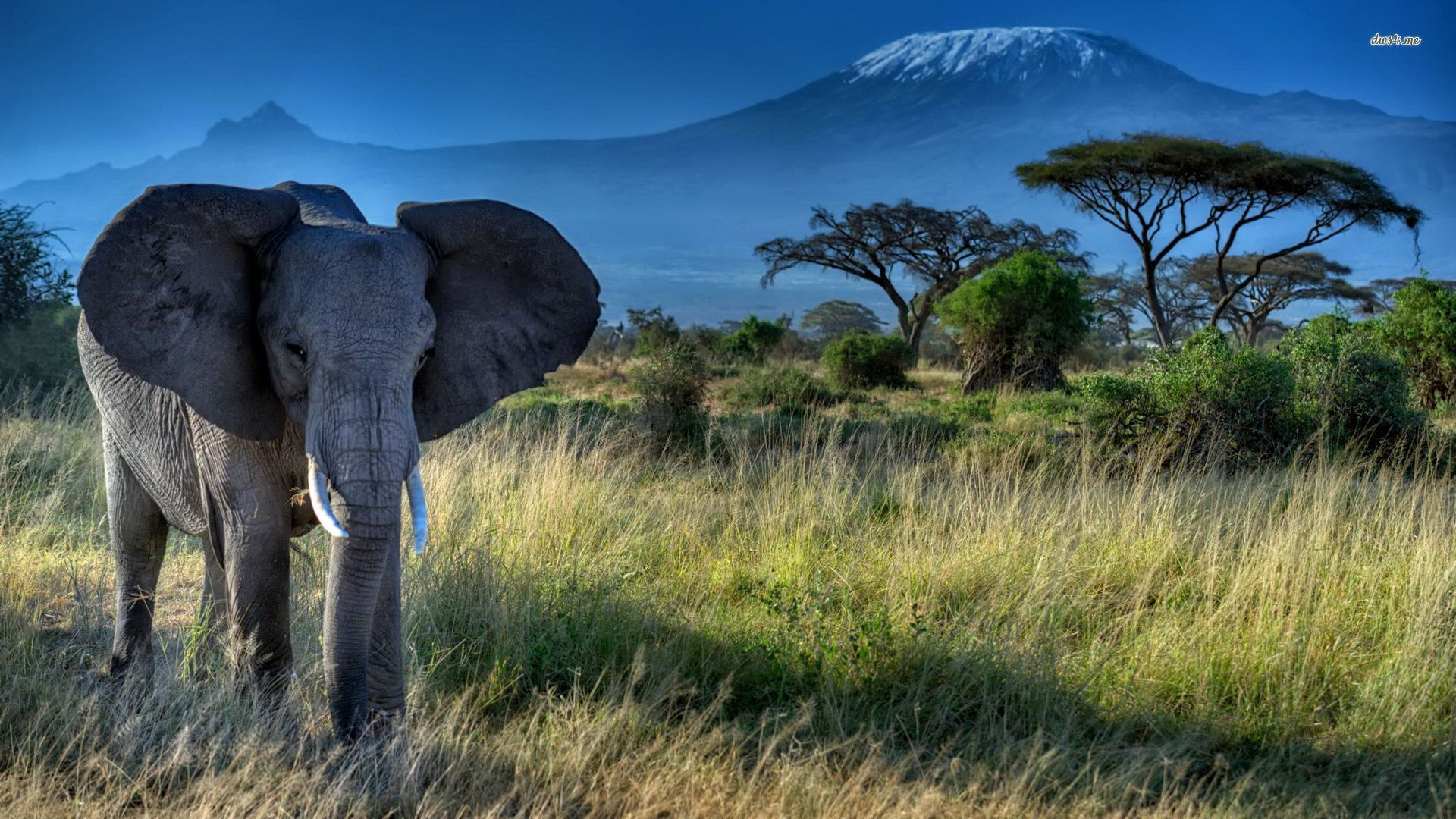 Wallpaper download elephant - Elephant Hd Desktop Wallpaper High Resolution Wallpaper Full Size