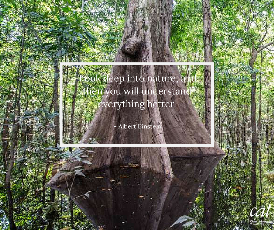 remarkable quotes about the amazon rainforest habits for